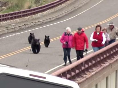 クマ一家が観光客らに大接近