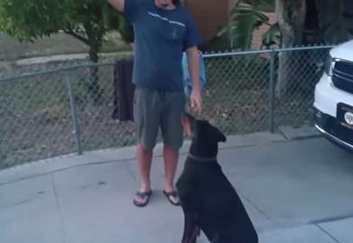 大型犬を空中キャッチする方法