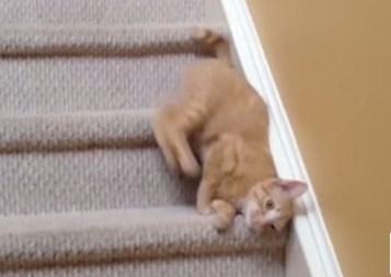 滝のように階段を下る猫の映像集