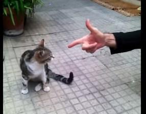 たまたま?それとも…、ネコにバキューンが通用した