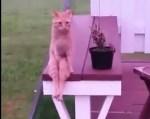 人間みたいに座るニャンコの映像