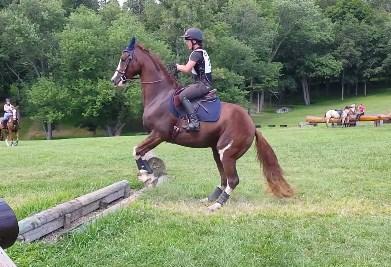 慎重な馬が障害飛越競技にチャレンジ