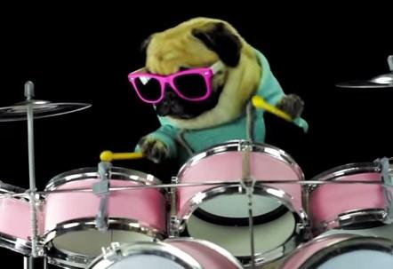 パグ犬がメタリカのドラムを演奏