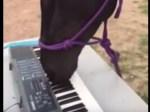キーボードを演奏する馬