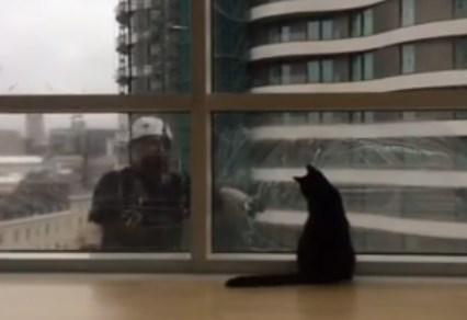 窓拭きのおじさんと遊ぶニャンコ