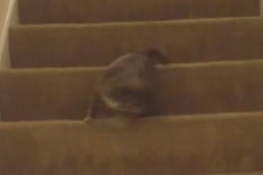 回転しながら階段をおりるワンコ