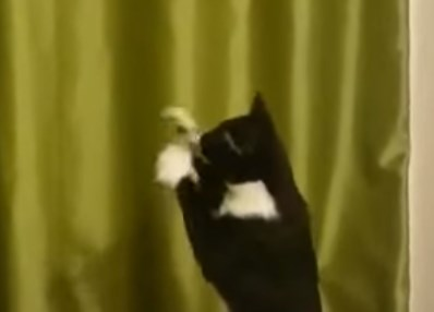 ぶら下がっているコップを一生懸命手に取ろうとする猫