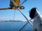 ボートに並んで飛行するコンゴウインコにワンコびっくり