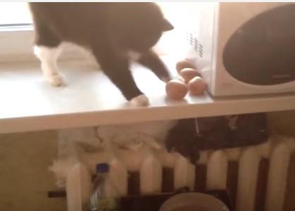 ニャンコがジャガイモを鍋に落として料理のお手伝い