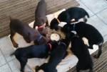 渦を巻くように食事をする7頭のワンコ