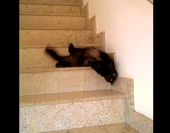 階段を流れる黒い液体の正体はニャンコ