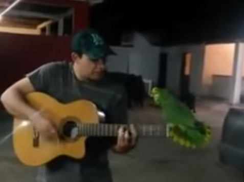 オウムと一緒にギター&ボーカルセッション