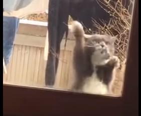 入れてくれー