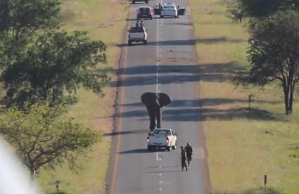 ご機嫌斜めなゾウが道路を封鎖するハプニング
