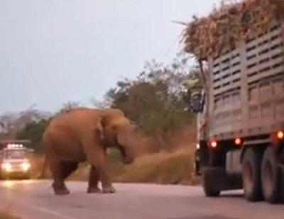 通行料を徴収するゾウ