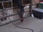 道具を使って届かないエサを取る賢い馬