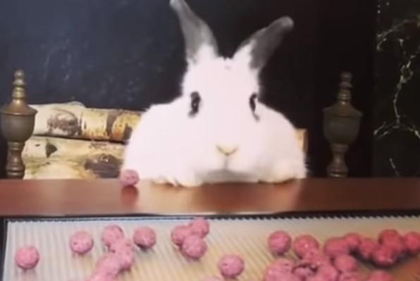 食べ物を見て慌てる食いしん坊なウサギさん
