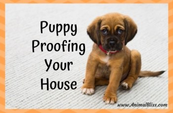 Puppy proofing your house.
