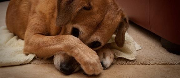 Πως να διώξετε την άσχημη αναπνοή του σκύλου σας