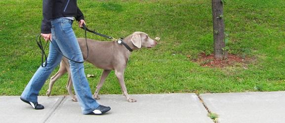 Συμβουλές για μια τέλεια βόλτα με το σκύλο