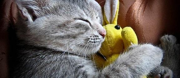 Γιατί κοιμούνται τόσο πολύ οι γάτες;