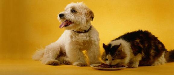 Animalcity.gr - Πως να σταματήσετε μια γάτα που τρώει το φαγητό του σκύλου