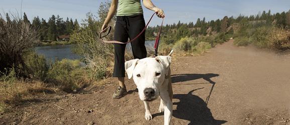 Για μια πιο ενδιαφέρουσα βόλτα με το σκύλο