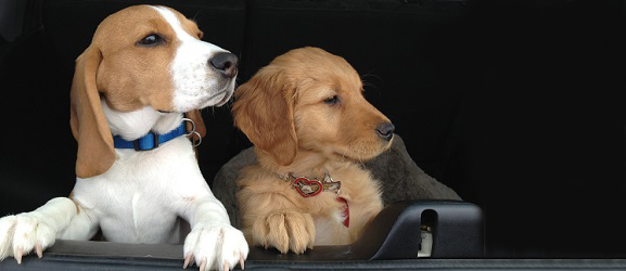 Σκουλήκια στους σκύλους και συμπτώματα