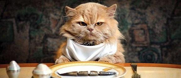 Animalcity.gr - Γιατί η γάτα μου δεν τρώει