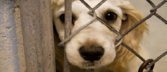 Πως να σταματήσετε τη βία στα ζώα