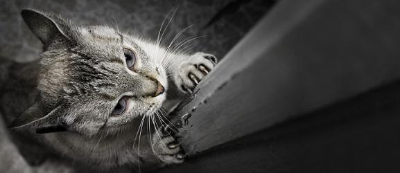 Σταματόντας μια γάτα που γρατζουνάει τα έπιπλα