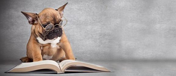 Animalcity.gr - 10 γεγονότα για τους σκύλους