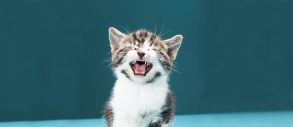 Γιατί κλαίνε οι γάτες;