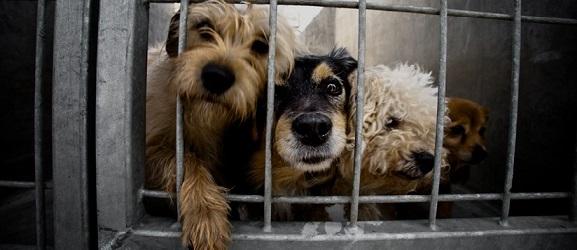 Animalcity.gr - Ποιο σκύλο θα πέρνατε σπίτι
