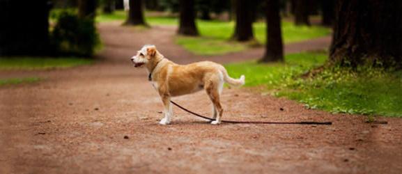 Animalcity.gr - Τι να κάνετε για να μη χάσετε ποτέ το σκύλο σας