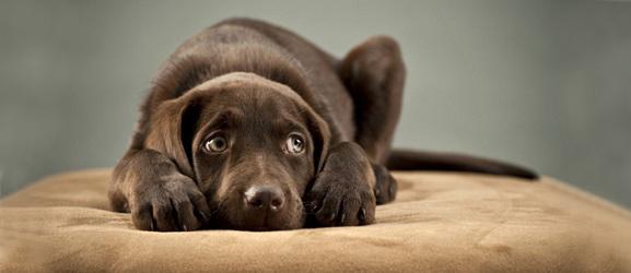 φοβισμενος σκυλος