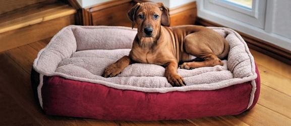 κρεβατι σκυλου