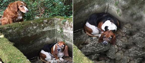 Ανιμαλψιτυ.γρ - Πιστός σκύλος φυλάει το παγιδευμένο του φίλο για 7 ημέρες