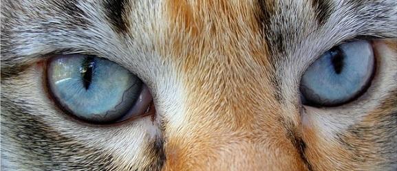 Μήπως η γάτα σας έχει μειωμένη όραση;