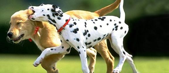 Animalcity.gr - Όταν ένας σκύλος παίζει πολύ άγρια