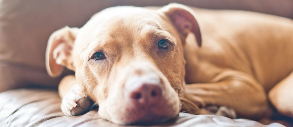 Τα πάντα για τη δηλητηρίαση στους σκύλους