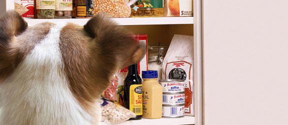Τροφές τοξικές για τους σκύλους