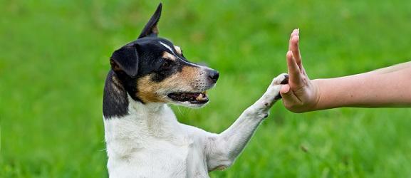 Συμπεριφορα σκυλου