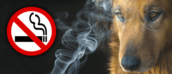 Το παθητικό κάπνισμα βλάπτει και τα κατοικίδια!