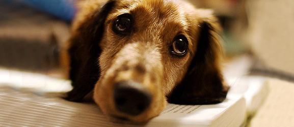 Γιατί δακρύζει ο σκύλος μου;