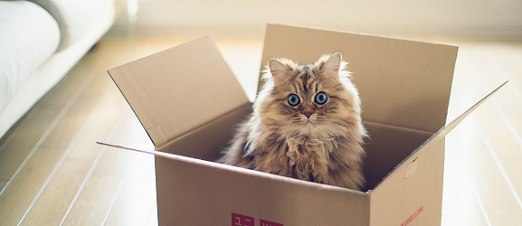 Γιατί οι γάτες αγαπούν τα κουτιά;