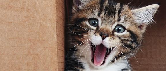 Animalcity.gr  - 9 γεγονότα για τις γάτες που ίσως δεν γνωρίζετε