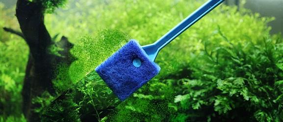 Πως να καθαρίσετε ένα ενυδρείο