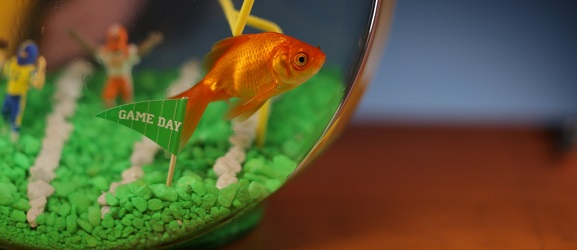 Ψάρια που μπορούν να ζήσουν σε γυάλα