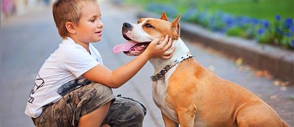 Οι 4 πιο παρεξηγημένες ράτσες σκύλων
